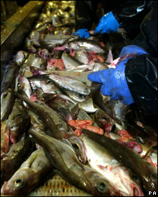 Deckhands gut fish trawled from the North Sea