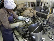 Workers shuck oysters at the P&J Oyster Company, New Orleans, 28 April