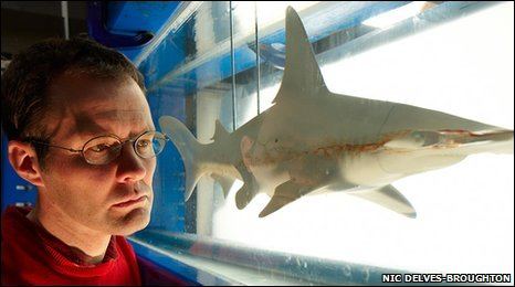 Dr Jonathan Cox and a model of a hammerhead shark