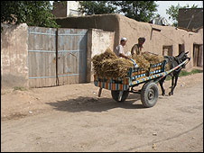 Donkey and cart go past Faisal Shahzad's family home