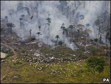 Deforestation, Brazil (Image: PA)