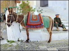 A donkey in Greece with a bright coloured saddle