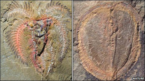 Fossils of soft-bodied marine creatures, discovered in south-eastern Morocco