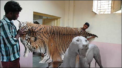 Taxidermist with tiger skin in Mumbai