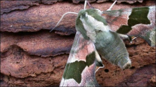 Moths have suffered a major drop in numbers
