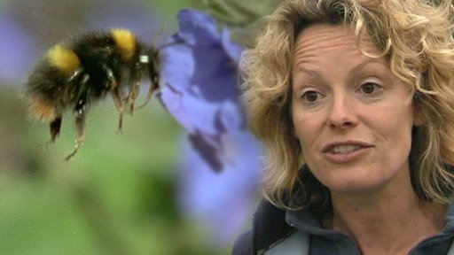 Kate Humble champions Bee Part Of It