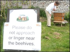 Elaine Gibbs looking after bees at Felbrigg Hall, Norfolk
