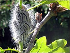 Caterpillars in a tree