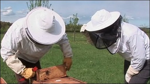 Bee keepers at a hike