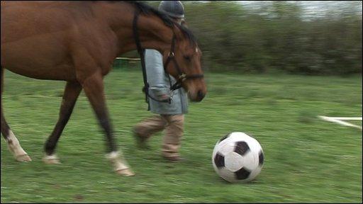 Horse kicking football