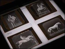 Muybridge's galloping horses