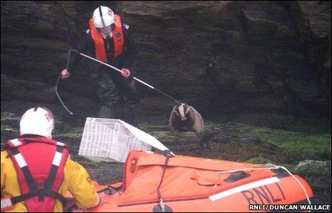 Stranded badger. Pic: RNLI