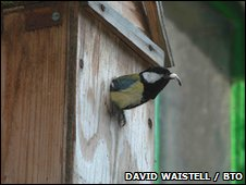 Great tit in nestbox