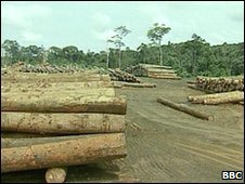 Felled trees in Brazil
