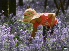 Girl picking bluebells