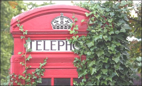 Ivy covering a telephone box