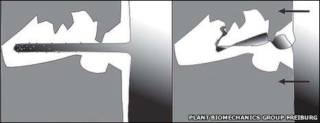 Diagram of root hair