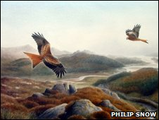 Red kite, by Philip Snow