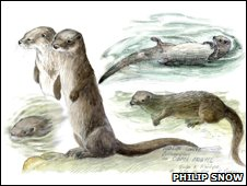 Otters, by Philip Snow