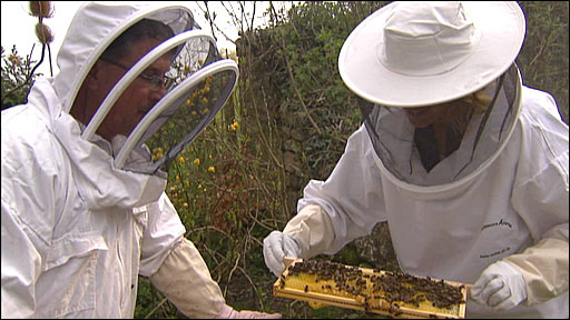 Kate Humble examines her bee hive