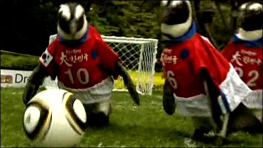 Penguins playing football