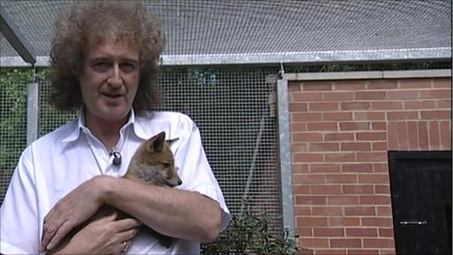 Brian May and fox