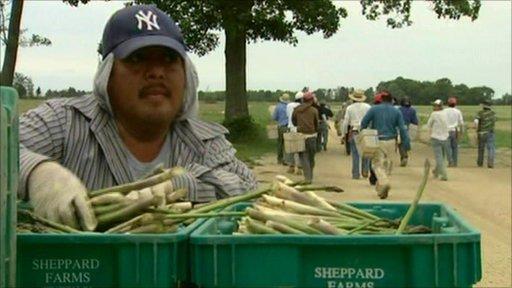 Packing asparagus