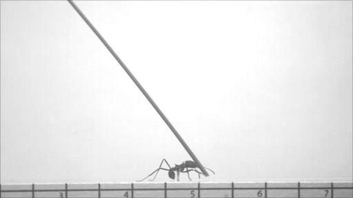 Ant lift screen shot