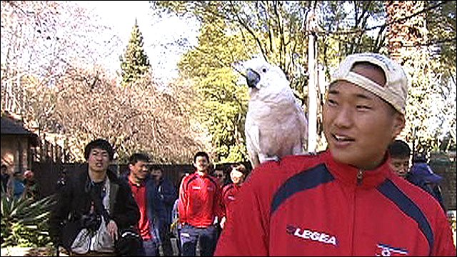 North Korea player with parrot