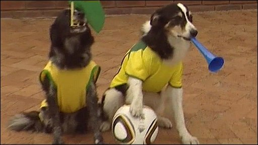 Football playing dogs in South Africa