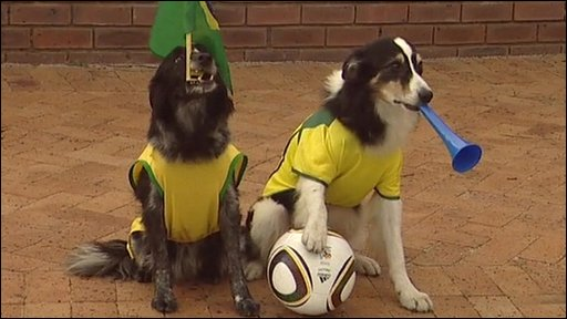 The dogs as footie fans