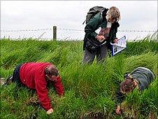 Volunteers check for water voles