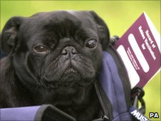 Dog with pet passport