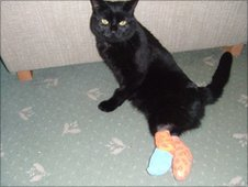 Oscar the cat with legs bandaged (photo: Mike Allan)
