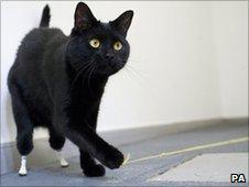 Oscar the cat (photo: Jim Incledon/PA Wire)