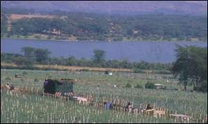Carnation field by lake
