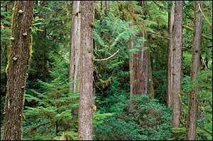 Forest   1999 EyeWire, Inc.