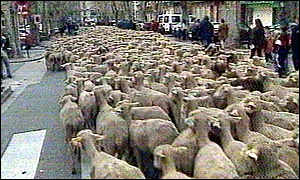 Sheep farmers take to the streets of Aix-en-Provence with their flocks