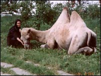 Монашка и верблюд