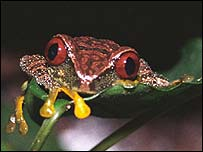 Frog  (Image: Conservation International/Don Church)