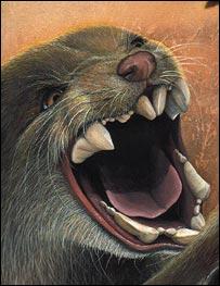 BBC NEWS | Science/Nature | Marsupial munch tops big biters