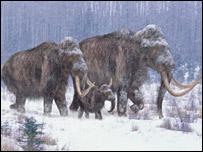 Extinct mammoth DNA decoded