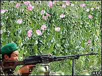 Soldier in poppy field
