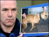 BBC NEWS | UK | Northern Ireland | Pit bulls handed over to council