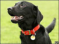 Un perro en Edimburgo