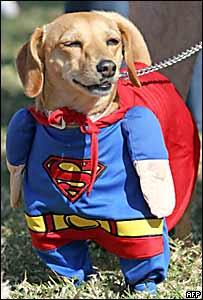 Un perro en un concursod e disfraces