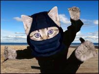 _42483795_kittens_203.jpg