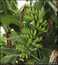 Bbc News Uk Magazine How Fair Is Fairtrade