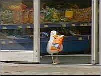 BBC NEWS | UK | Scotland | North East/N Isles | Seagull becomes crisp shoplifter