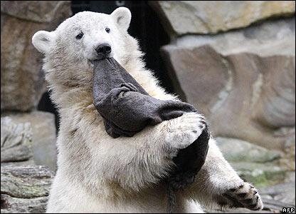 Как сообщает Lenta.Ru, зоопарк уже объявил о сборе... берлинском зоопарке будет установлен памятник белому медведю...